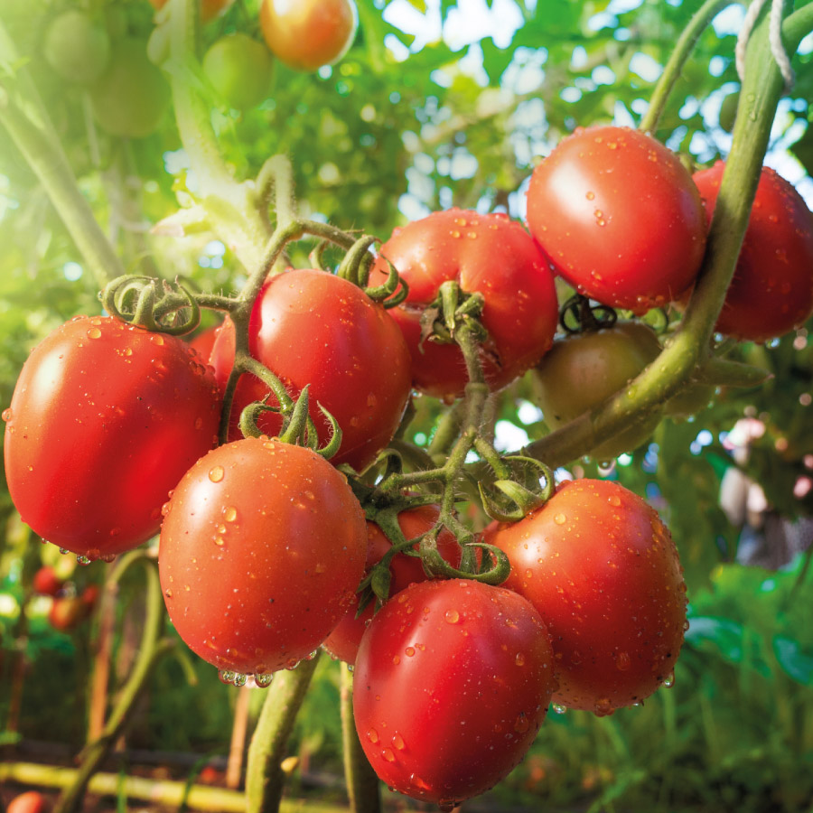 Nawozy naturalne od producenta